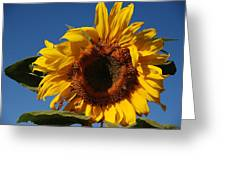Sun Blessed Greeting Card