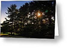 Sun Burst Through The Trees Greeting Card