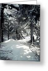 Sun Dappled Snow Greeting Card