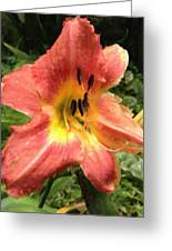 Sun Day Lilly  Greeting Card
