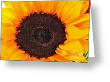 Sun Delight Greeting Card