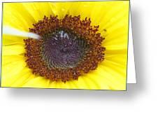 Sun Dial Greeting Card