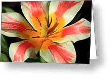 Flower Of Velvet Greeting Card