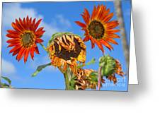 Sun Drenched In Autumn By Diana Sainz Greeting Card