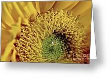 Sun Drop Greeting Card