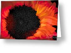 Sun Fire Greeting Card