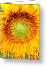 Sun Flower Power Greeting Card