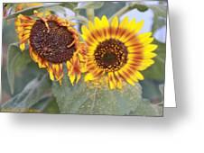 Sun Flowers Greeting Card