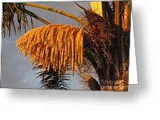 Sun Glowing Palm Greeting Card