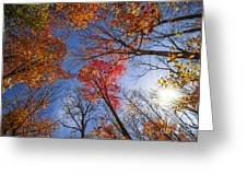 Sun In Fall Forest Canopy  Greeting Card