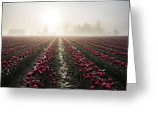 Sun In Fog And Tulips Greeting Card