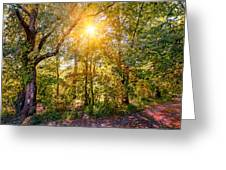 Sun In The Autumn Forest Greeting Card