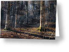 Sun In The Forest Greeting Card