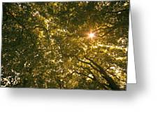 Sun In The Trees Greeting Card