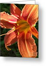 Sun Kissed Daylily Greeting Card