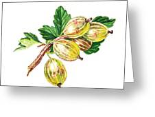 Sun Kissed Gooseberries Branch Greeting Card