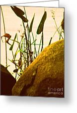 Sun Kissed Grass And Rocks   Greeting Card