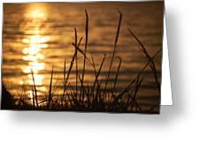 Sun Kissed  Greeting Card