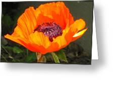 Sun-kissed Poppy Greeting Card