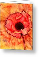Sun Kissed Poppy Greeting Card