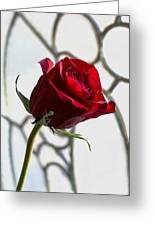 Sun Kissed Rose Greeting Card