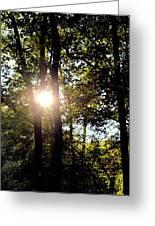 Sun Kissed Trees Greeting Card