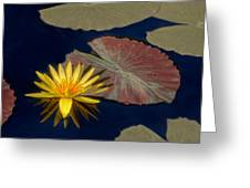 Sun-kissed Water Lily Greeting Card