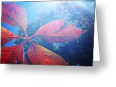 Sun Leaf Greeting Card