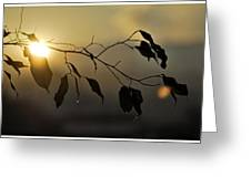 Sun Leaves Greeting Card