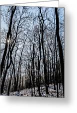 Sun Lit Frozen Rain 2 Greeting Card
