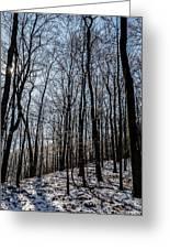 Sun Lit Frozen Rain 3 Greeting Card