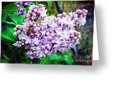 Sun Lit Lilac The Sweet Sign Of Spring Greeting Card