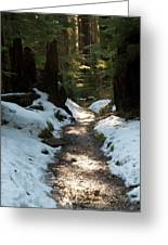Sun Lit Trail, Olympic National Park Greeting Card