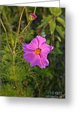 Sun Lit Wildflower Greeting Card