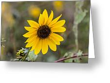 Sun Of A Cloudy Day Greeting Card