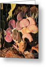 Sun On Cactus Greeting Card