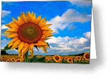 Sun On My Face Greeting Card