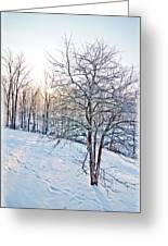 Sun Over A Snowy Day Greeting Card