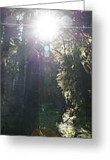 Sun Penetrates The Redwood Forest Greeting Card