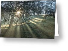 Sun Rays  On A Hillside Greeting Card