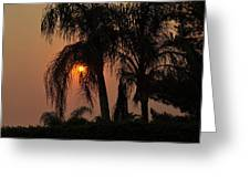 Sun Setting Behind The Queen Palm Covered In Smoke Greeting Card