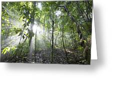 Sun Shining In Tropical Rainforest Greeting Card