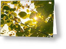 Sun Shining Through Leaves Greeting Card