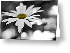 Sun-speckled Daisy Greeting Card