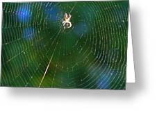Sun Spider In Rainbow Web Greeting Card