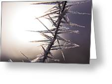 Sun Spikes Greeting Card