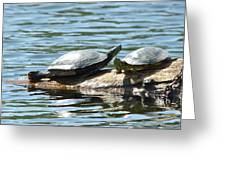 Sun Stretching Turtle And Youngster Greeting Card