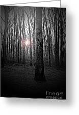 Sun Thru The Trees At Twilight Greeting Card