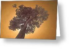 Sun Tree Greeting Card
