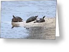 Sun Turtles Greeting Card